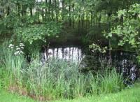 Bодно-болотных угодий
